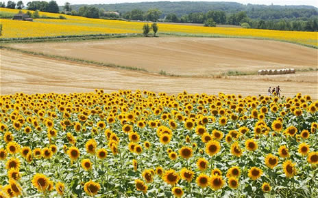 Aquitaine countryside