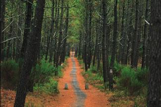 Landes forest