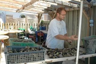 Oyster-tasting in Hossegor