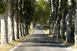 Tree-lined French road