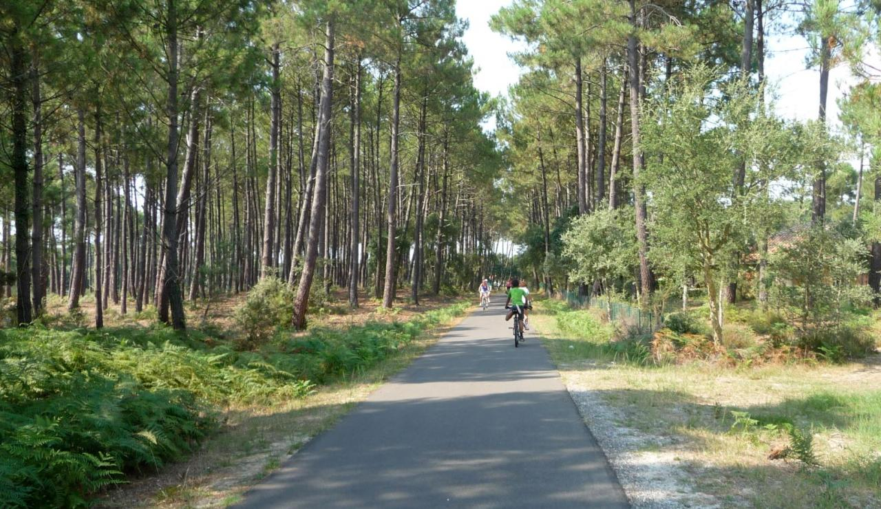 forest-cycle-trails